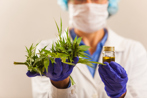 Do Australians Benefit from Medical Cannabis Use? article image by Medicalcannabisaust.com.au